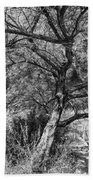 Palo Verde In Black And White Beach Towel