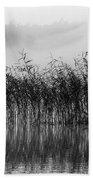 Pampas Grass In Fog Beach Towel