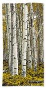 Panoramic Birch Tree Forest Beach Towel