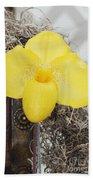 Paphiopedilum Fumis Gold Beach Towel