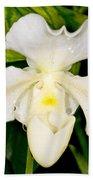 Paphiopedilum Orchid Beach Towel