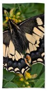 Papilio Machaon Butterfly Sitting On The Lucerne Plant Beach Towel