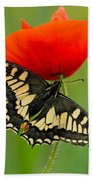 Papilio Machaon Butterfly Sitting On A Red Poppy Beach Towel