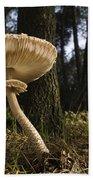 Parasol Mushrooms Pair In Forest Spain Beach Towel