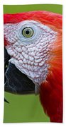 Parrot 35 Beach Towel