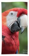 Parrot Profile Beach Towel