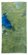 Parrotfish On A Swim Beach Towel by John M Bailey