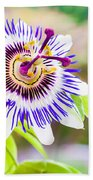 Passiflora Or Passion Flower Beach Towel