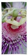 Passion Flower In Bloom Beach Towel