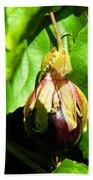 Passion Fruit 10-18-13 By Julianne Felton Beach Towel