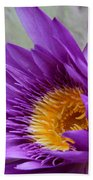 Passionate Purple Water Lily Beach Towel