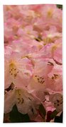 Pastel Coral Azaleas Refreshed By The Rains Beach Towel