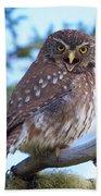 Patagonia Pygmy Owl Beach Towel