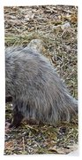 Pawing Possum Beach Towel