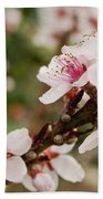 Peach Tree Blossoms Beach Towel