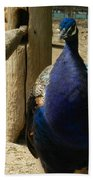 Peacock At The Fence Beach Towel