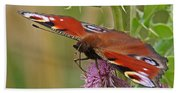Peacock Butterfly On Thistle Square Beach Towel