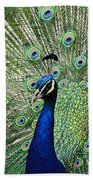 Peacock Display Beach Towel