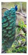 Peacock Perching On A Branch, Kanha Beach Towel