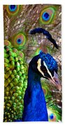 Peacock Pride Revisited Beach Towel