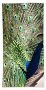 Peacock Show Beach Towel