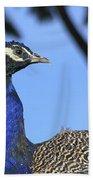Indian Peacock Portrait Beach Towel