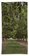Pecan Orchard Sahuarita Arizona Beach Towel