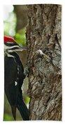 Pecking Woodpecker Beach Towel