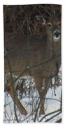 Peek A Boo Deer Beach Towel