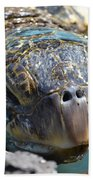 Peek-a-boo Turtle Beach Towel