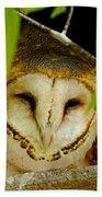Peering Barn Owl Beach Towel