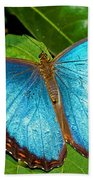 Peleides Blue Morpho Beach Towel