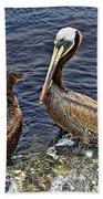 Pelican And American Black Duck Beach Towel