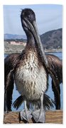 Pelican At Avila Beach Ca Beach Towel