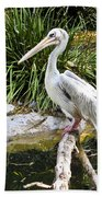 Pelican At Rest Beach Towel