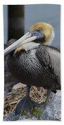 Pelican On Rocks Beach Towel