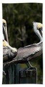 Pelican Threesome Beach Towel