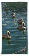 Pelicans On The Water In Key West Beach Towel