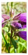 Penstemon On Miles Canyon Trail To Canyon City Near Whitehorse-yk  Beach Towel