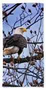 Perched Bald Eagle Beach Towel