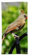 Perched Cardinal Beach Towel
