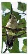 Perched Hummingbird Beach Towel