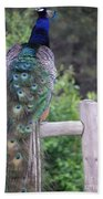 Perched Peacock Beach Towel