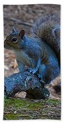 Perching Squirrel Beach Towel