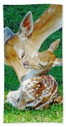 Pere David Deer And Fawn Beach Towel