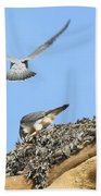 Peregrine Falcons - 2 Beach Towel