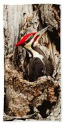 Perfect Pileated Pose Beach Towel