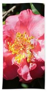 Perfect Pink Camellia Beach Towel