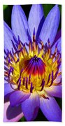 Perfect Water Lily Beach Towel