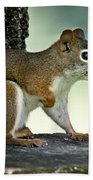 Perky Squirrel Beach Towel